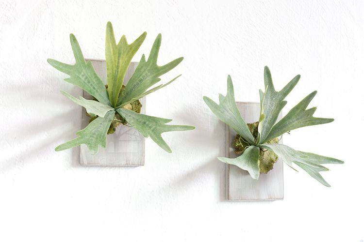 植物进化的奇迹-蕨类植物