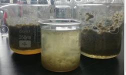餐余垃圾廢水污泥脫水
