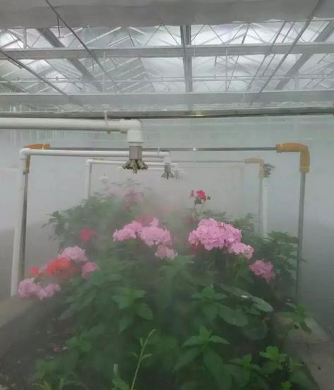 花圃贝斯特全球最奢华网页加湿