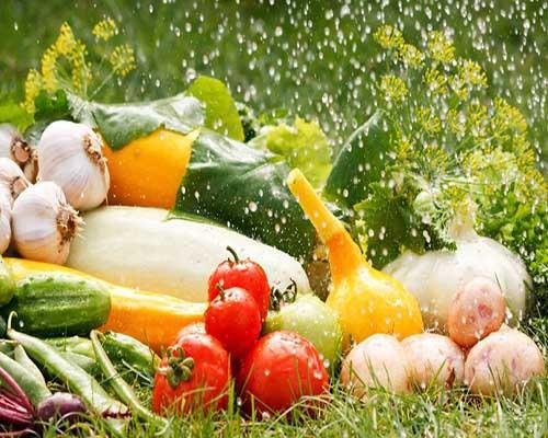 冷库速冻蔬菜未来发展形势大好