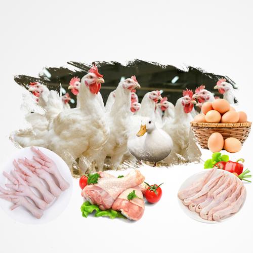 鸡爪、鸡腿、鸭掌、鸡胸肉、鸭翅、鸭腿、鸭胸肉等产品批发报价
