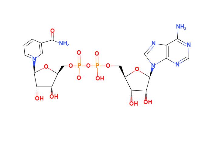 烟酰胺腺嘌呤双核苷酸,NAD,CAS NO:53-84-9