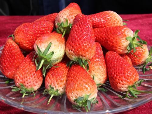 白草莓到底是什么?