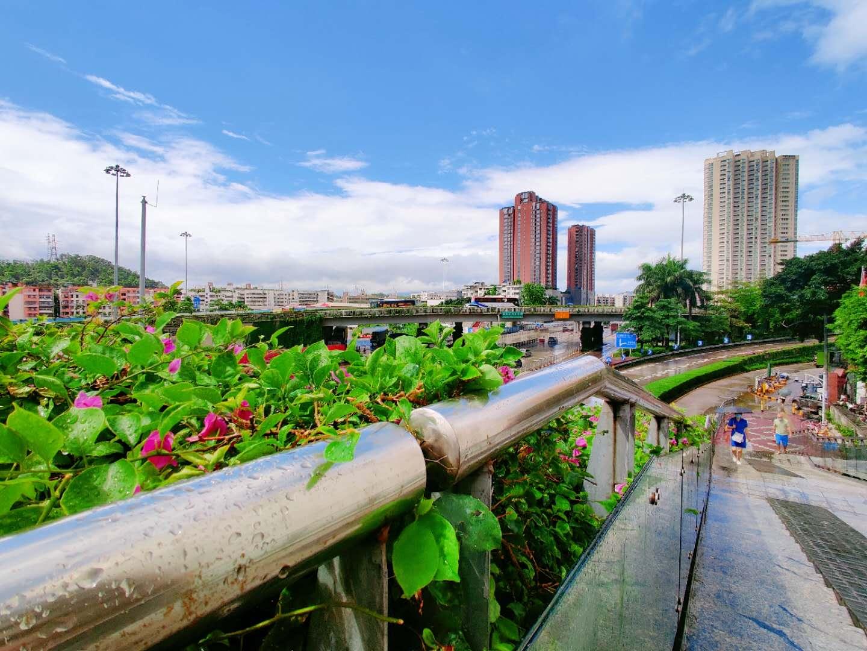 """台风过了,深圳旅游去西冲去海边这个夏天""""热""""起来了"""
