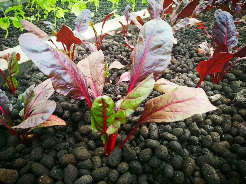 陶粒对种植花卉植物的好处