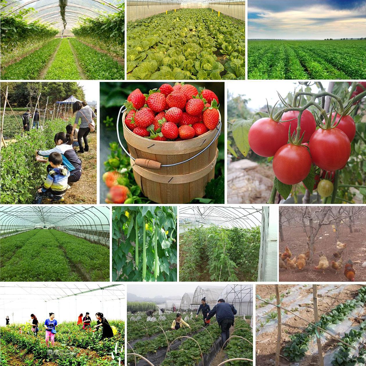好身体吃健康农产品!