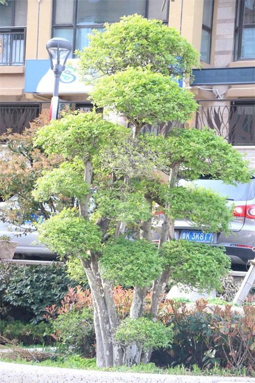 造型植物特写