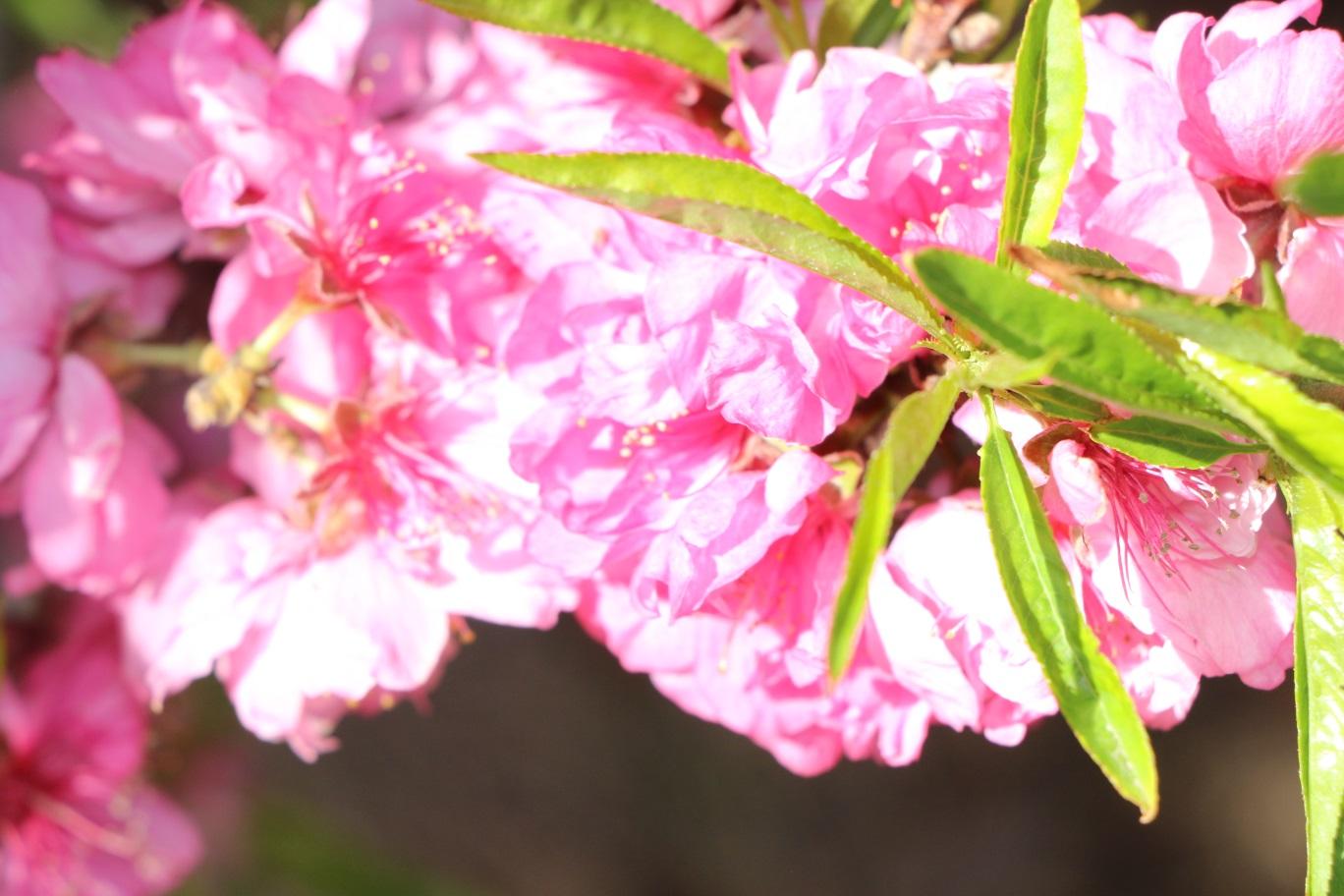 观花植物特写