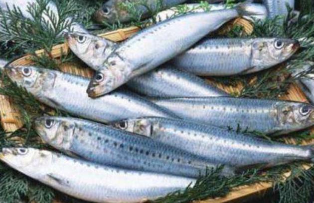 冷冻水产品沙丁鱼进口清关代理