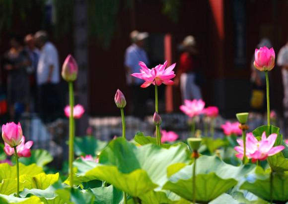公园荷花池景观贝斯特全球最奢华网页