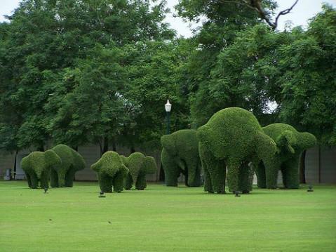 园林绿化工程中植物设计原则