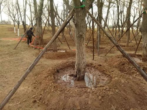 苗木移栽好了,每年减少一大半损失
