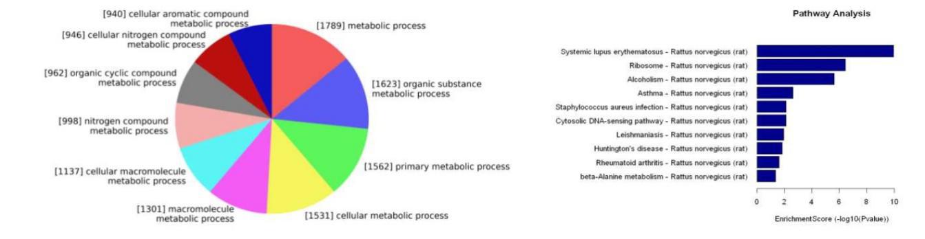 对差异TE基因进行功能分类,并发现显著性富集的功能条目。