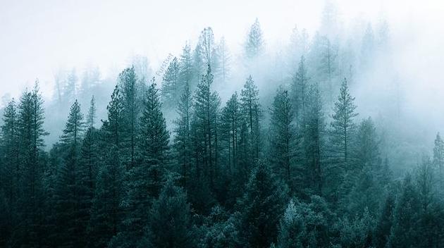 中国森林旅游影响力百强榜