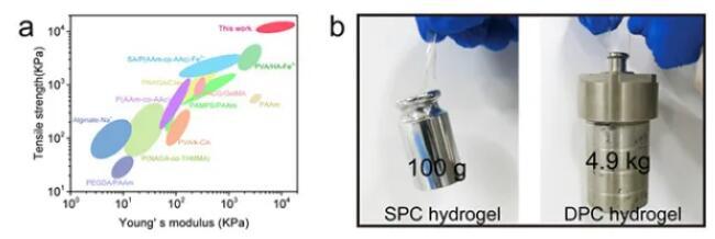 图2. 3D 打印双物理交联水凝胶力学性能与展示©兰州化学物理研究所.png