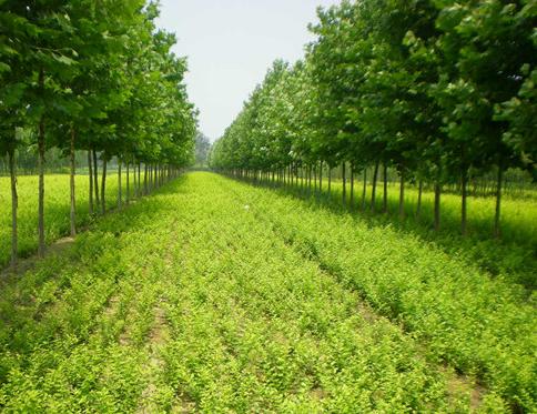 签订苗木购销合同需要注意哪些事项?