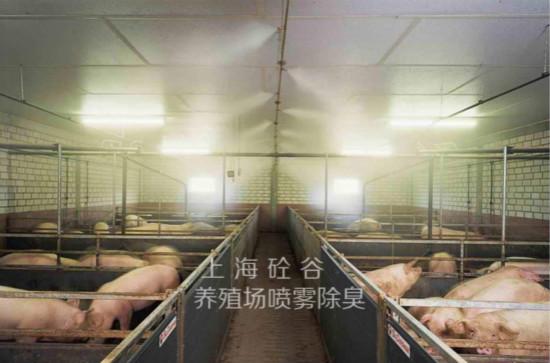 养猪场贝斯特全球最奢华网页除臭