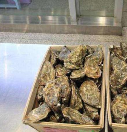 生蚝牡蛎进口清关