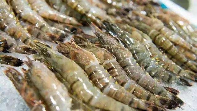 黑虎虾进口清关