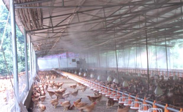 养殖场贝斯特全球最奢华网页除臭案例