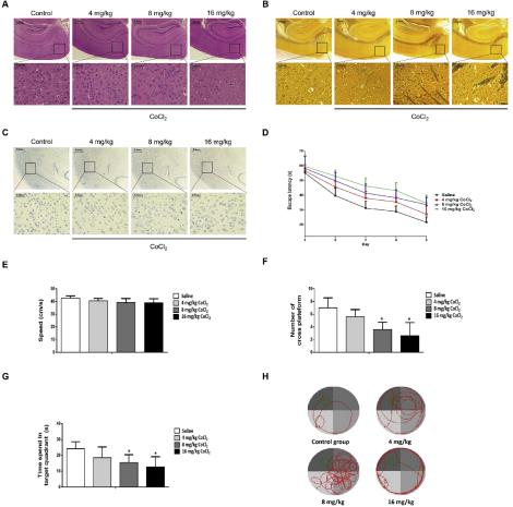 (1)CoCl2引起神经系统的病理和神经行为损伤