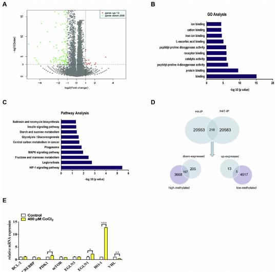 (6)GO和KEGG通路分析CoCl2处理H4细胞后表达变化的基因的富集情况