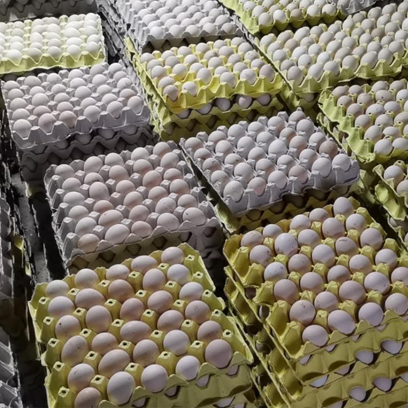 土雞蛋(dan)