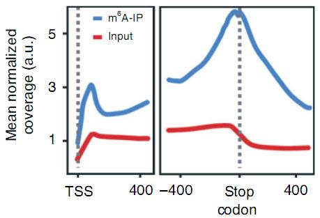 1.识别O8G RNA氧化富集区域(*)