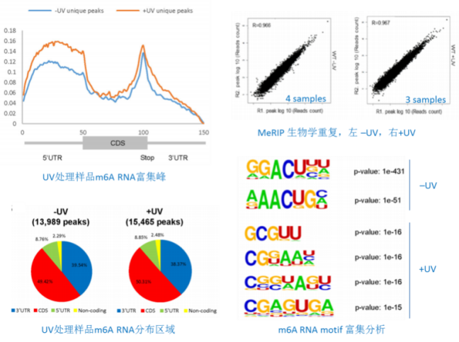 2.O8G RNA氧化区域注释(*)