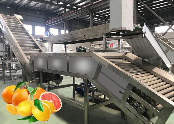 柑橘加工生产线