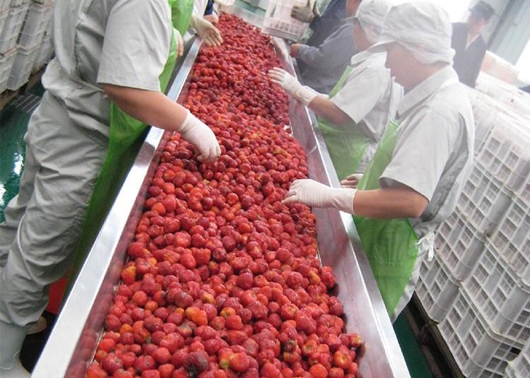 浆果类加工生产线
