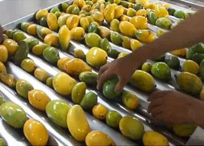 芒果菠萝加工生产线