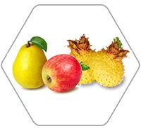 苹果梨刺梨加工生产线