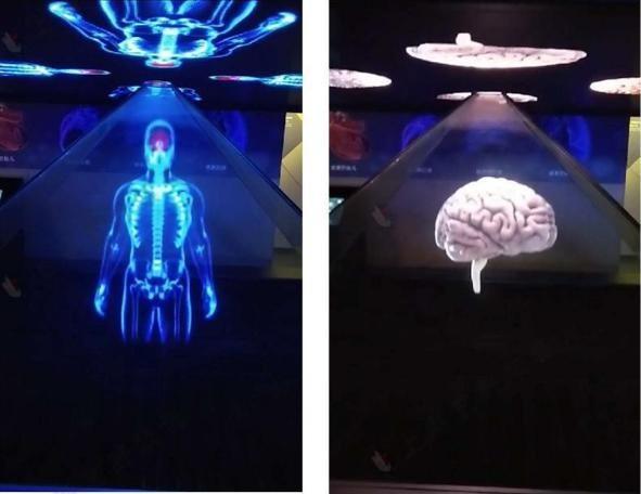 3D 人体吸 毒危害系 统