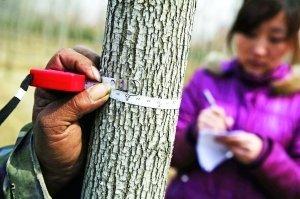 关于苗木规格术语你知道多少?
