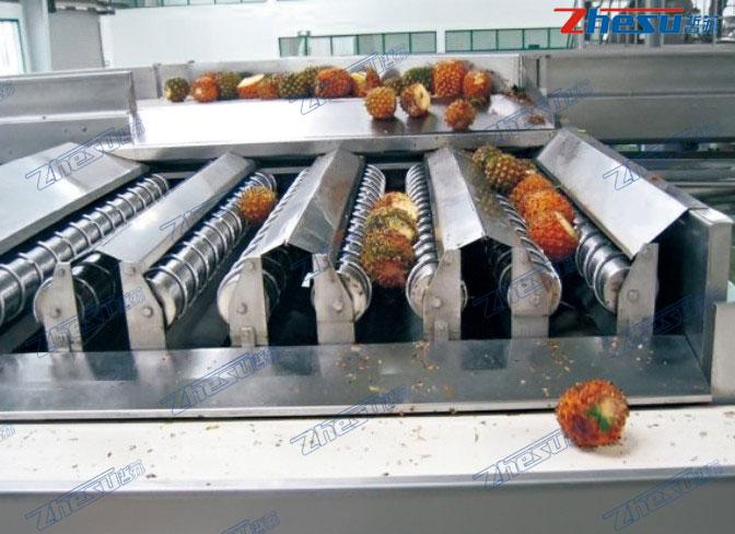 热带水果(芒果、菠萝、火龙果、椰子等)系统工程.05
