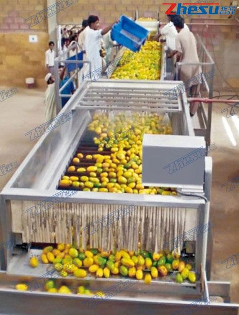 热带水果(芒果、菠萝、火龙果、椰子等)系统工程.04