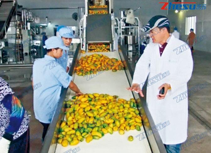 热带水果(芒果、菠萝、火龙果、椰子等)系统工程.06