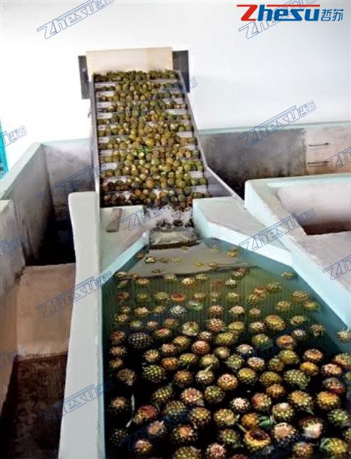热带水果(芒果、菠萝、火龙果、椰子等)系统工程.03