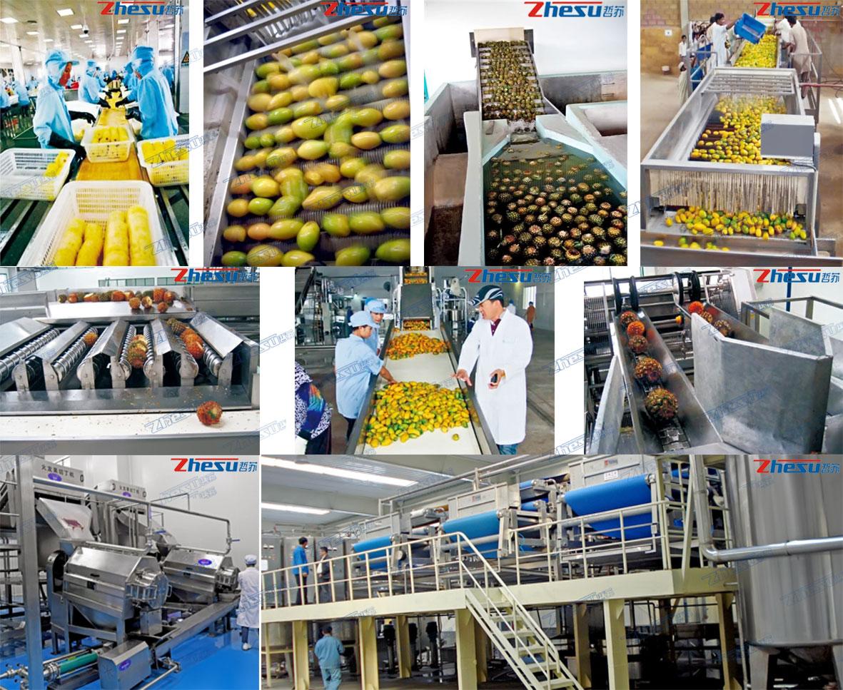 热带水果(芒果、菠萝、火龙果、椰子等)系统工程