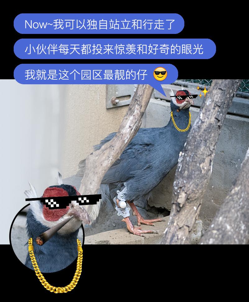 3D打印矫形器救治了一只二级保护动物|杭州博型3D打印创意设计