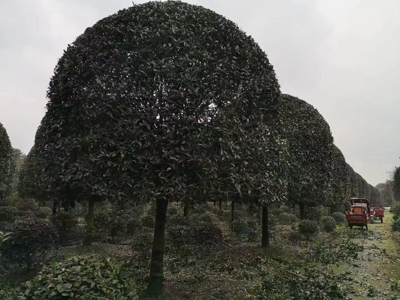 中国绿化城市排行