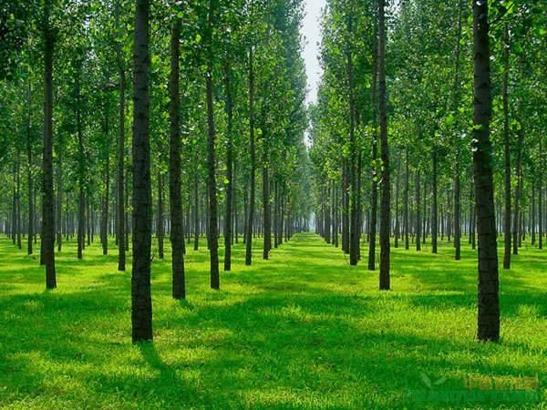 苗木行业该如何走出封闭的圈子?