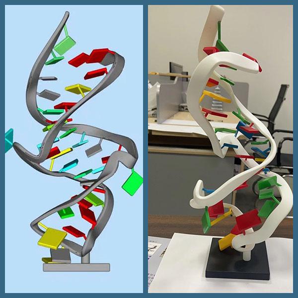 多色喷漆细胞模型摆件