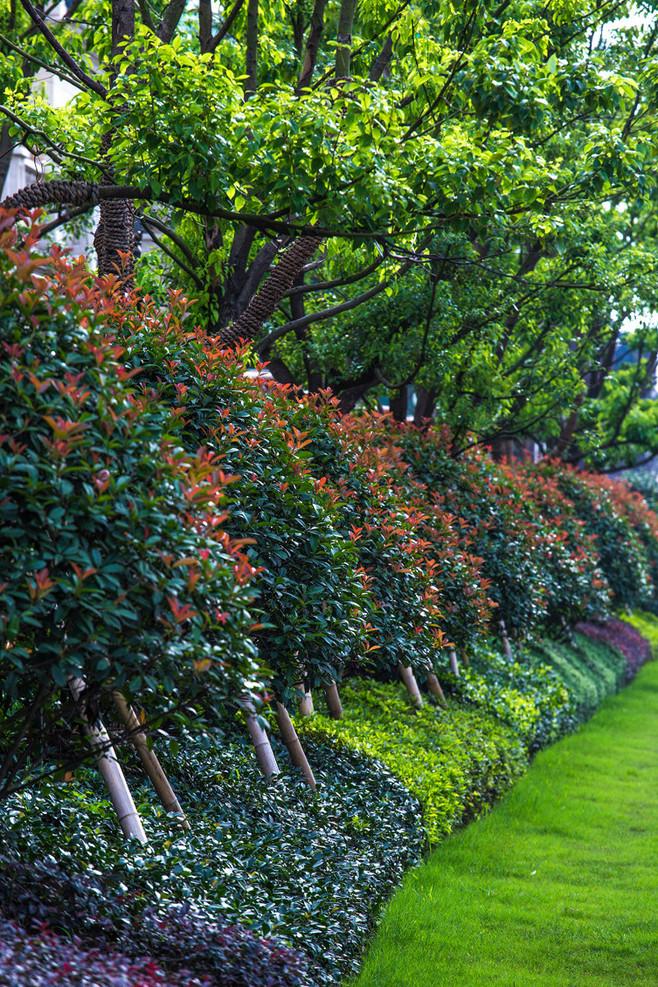 苗木种植:种什么树,比较前景好?