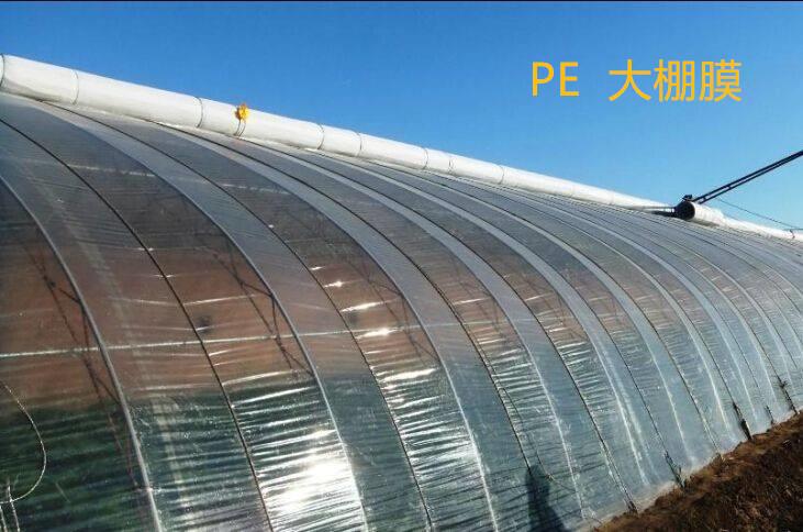 PE 成品图 2.jpg