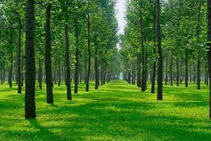 提高苗木存活率的十大绝招