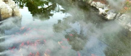 为什么越来越多的景观小区引进人工造雾系统