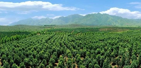 苗木反季节栽植的施工要点