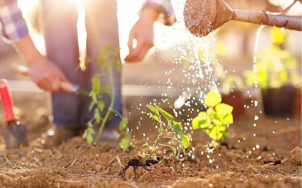 苗木培育前景和养护基础